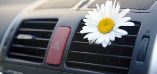 Средство для очистки кондиционера автомобиля: бактерии и грибки